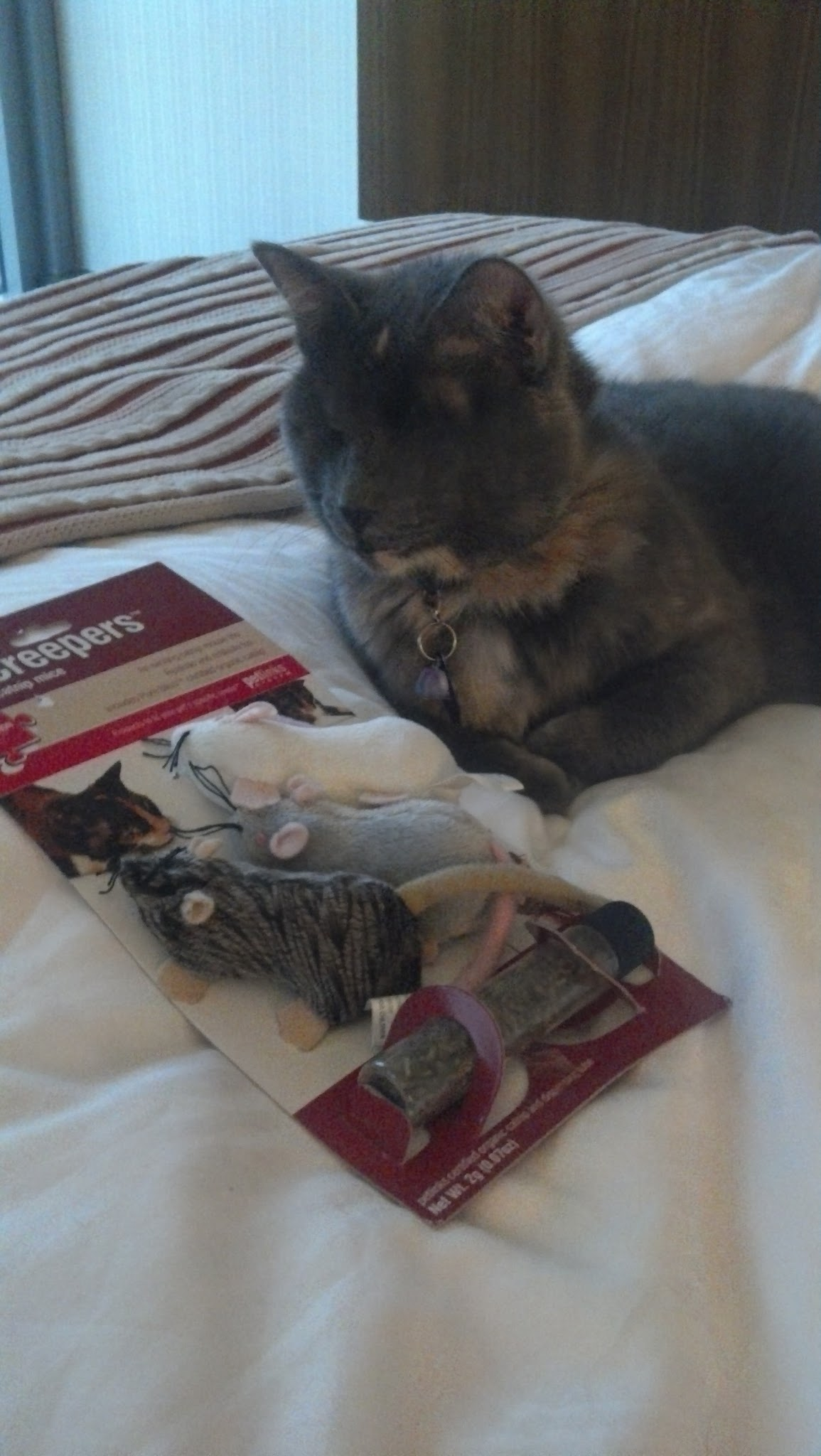 Nyx and her offerings from Lindsay