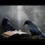 Reading Ravens